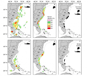 Fig. 4: This figure shows the kernel densities for tiger sharks (A,D), loggerhead turtles (B,E), and the areas of highest overlap (C,F). Maps are also broken down by summer and winter seasons.