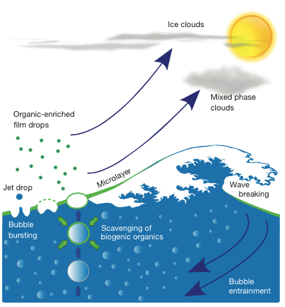 You don't Hokusai?! Model showing transport of organic aerosol particles by bubbles that burst at the sea surface.
