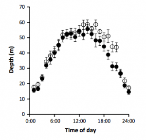 Average dive depths of 56 male (dark circles) and 48 female (empty circles) thick-billed murres between 2004 and 2009.