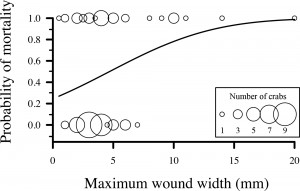FIGURE 1. Influence of wound width on survival probability for stone crabs in laboratory experiments I and II (n = 90). The graduated circles depict survival (0.0) and mortality (1.0), with the circle size proportional to the number of stone crabs represented (1−10). The curve is predicted from the logistic regression model (Wald χ2 = 2.10, P = 0.035).