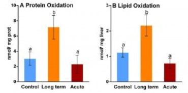 "Fig. 6. The livers of icefish exposed to long-term, but not short-term (""acute,"" red) elevations in water temperature had increased levels of oxidative damage to both proteins (A) and fats (B) relative to control animals (blue). Bars denoted by the same letter are not significantly different from each other. Adapted from Almroth et al., 2015."
