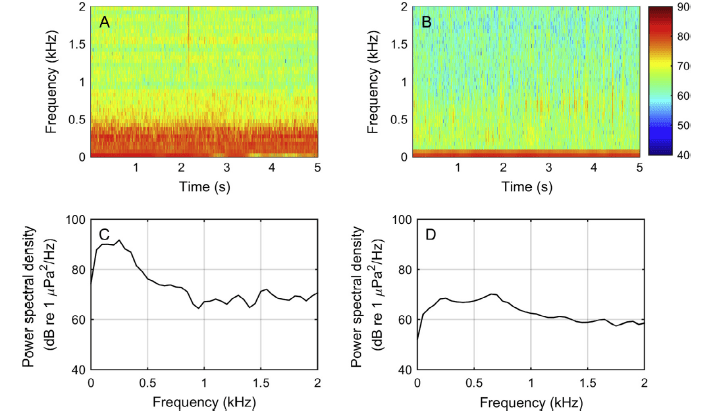 Fig. 3: The spectrograms of five seconds of recordings from 6 pm at TK A) with boat noise and B) without boat noise. The associated power spectra are in C) with and D) without. As you can see, with boat noise, the spectral density is increased in the low frequency range.