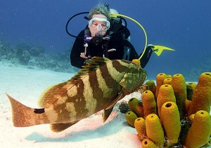 Figure 4: A naussa grouper- a protogynous grouper that is critically endangered, largely due to overfishing. Image from: fishinrules.com