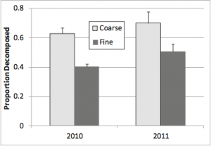 Fig. 9: The decomposition rates of beach wrack compared between years and between mesh size. You can see that coarse mesh that allows invertebrates in has a much high decomposition rate.