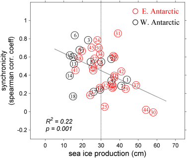 Figure 4 from Li et al. (2016) showing the relationship between synchronicity as shown in Figure 3, and the rate of sea ice production in each polynya. East Antarctic polynyas tend to have higher sea ice production due to local winds and lower synchronicity.