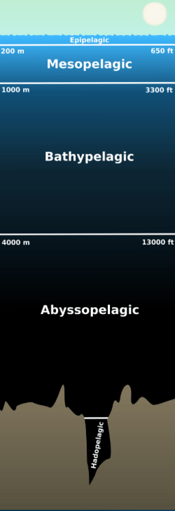 The ocean is divided into five major pelagic zones. Nearly all photosynthesis takes place in the epipelagic zone, and light steadily declines to total darkness by the end of the mesopelagic zone (~1000 m). The lower three zones – the bathypelagic, abyssopelagic, and hadopelagic – have relatively similar environments, and are always considered part of the deep sea. Sometimes the midwater (mesopelagic) zone is also put under the umbrella of the deep sea, due the negligible light levels. [Wikimedia Commons]