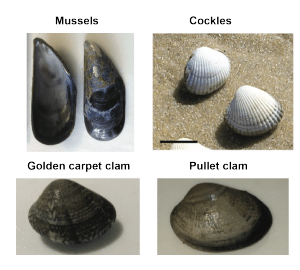The patients. Bivalves examined by this study.