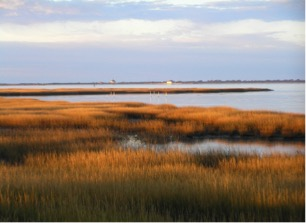 A salt marsh on Assateague Island Source: National Park Service