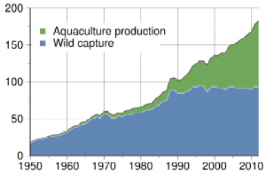 Aquaculture has become increasingly important to meeting the demand of fish my consumers globally (source: https://en.wikipedia.org/wiki/Aquaculture)
