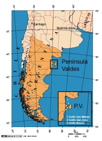 This study focused on southern right whales off the Atlantic side of the Patagonian coast, South America [Adapted from Wikimedia Commons].