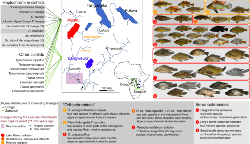 Map of the two lakes and photos of cichlid radiations.