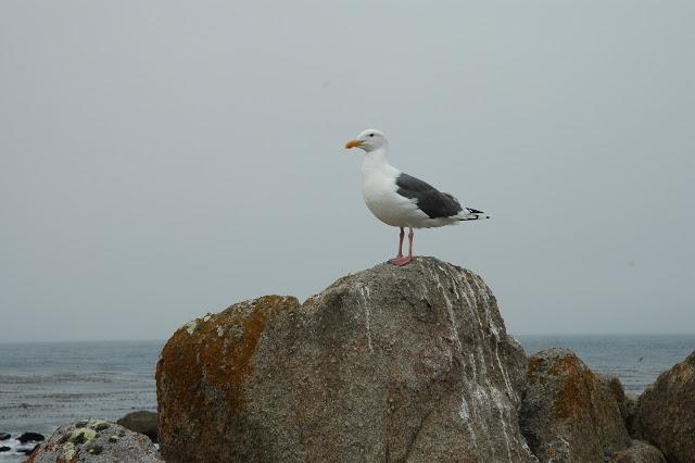 San-francisco_reise_Kalifornien_oceanbluestyle_fishermanswharf_C3BC40_modeblog28629