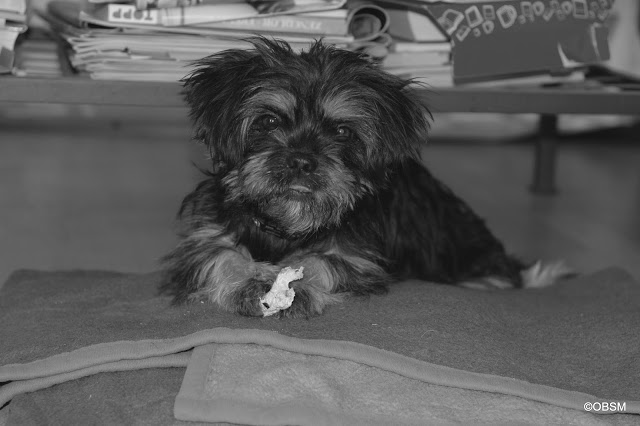 Strassenhund_adoptieren_rumänien-blog-oceanblue-style.jpg