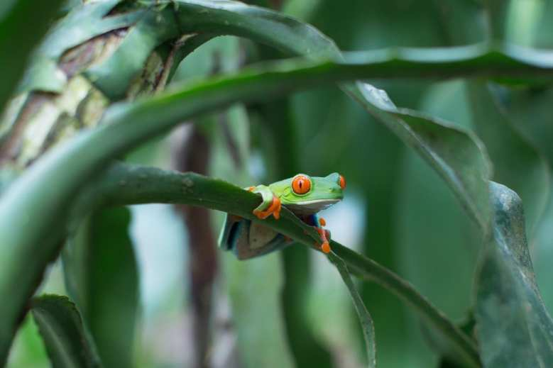 Amphibians Characteristics & Fun Facts