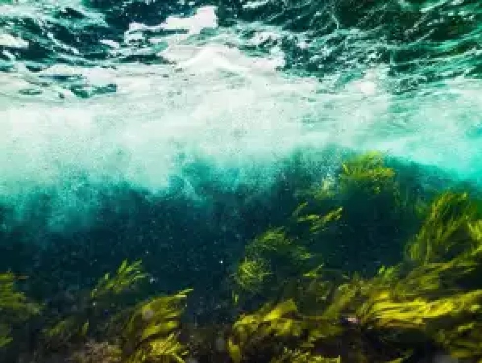 emerald-water-sea-ocean-underwater