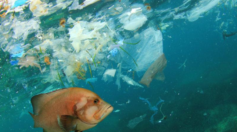 Fish swimming amongst floating plastic