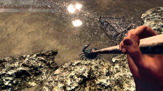 Stranded Deep Features