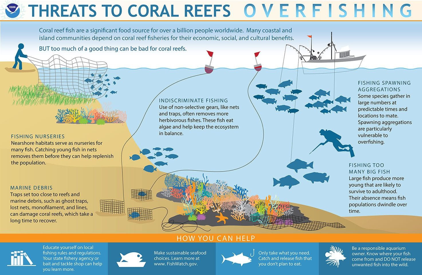 How Does Overfishing Threaten Coral Reefs