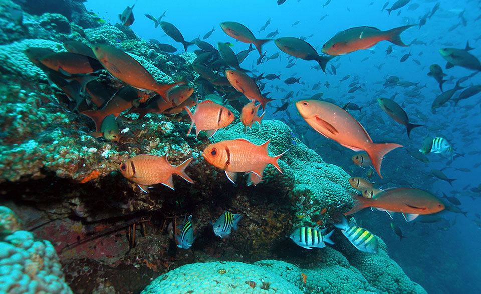 Brightly coloured fish swimming in the Flower Garden Banks National Marine Sanctuary