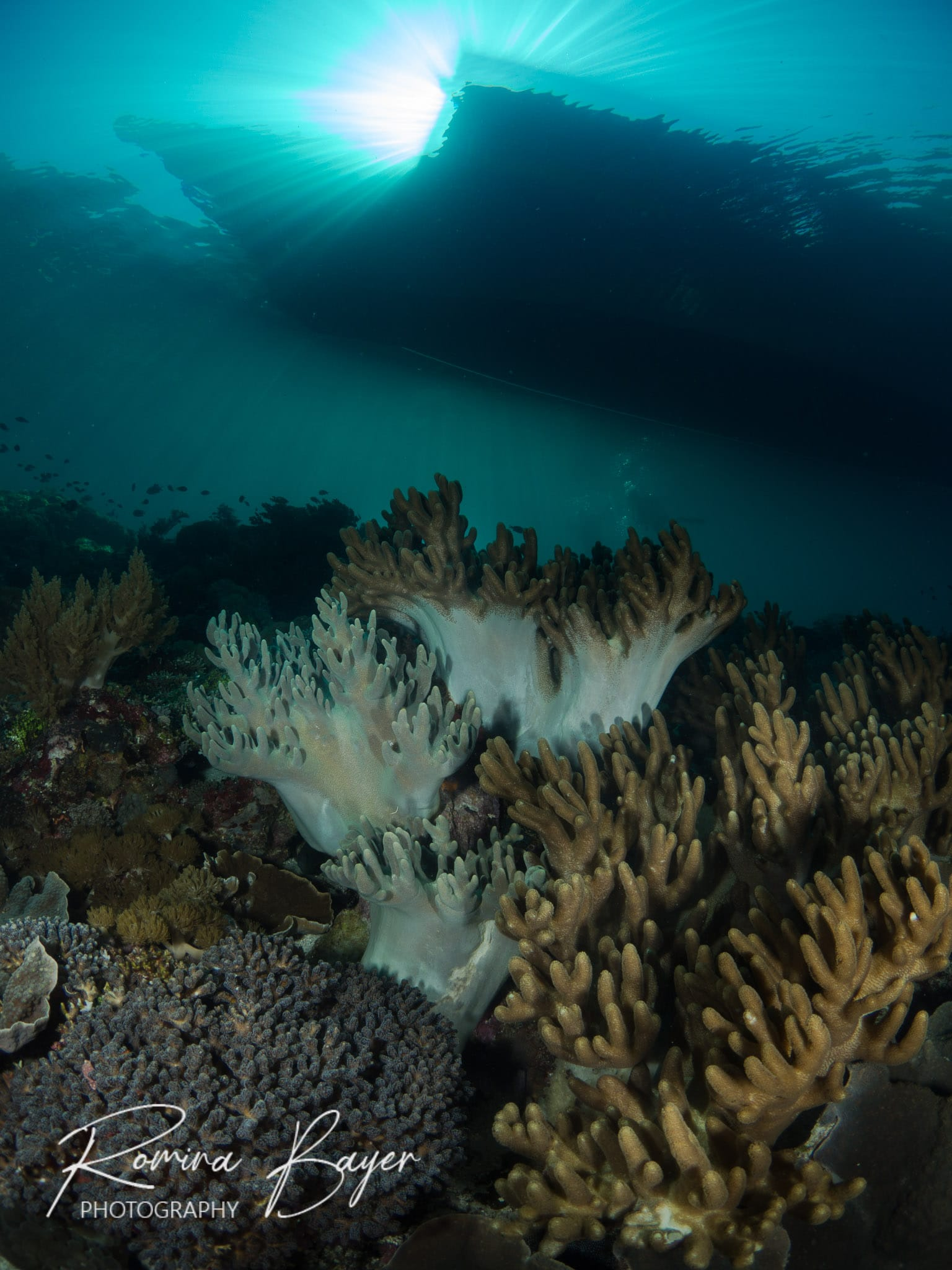 Wide-angle photo of a coral reef and a boat