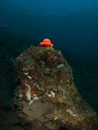 Subject position in underwater photography