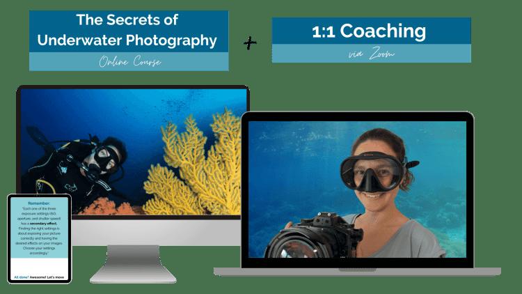Bundle Underwater Photo Online Course plus Private Coaching