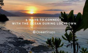 Connect with the oceans in lockdown