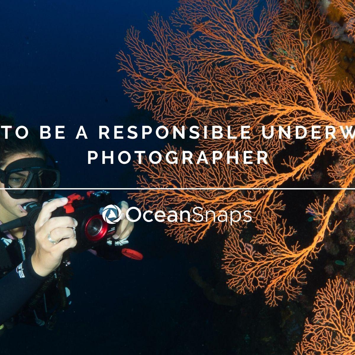 Responsible underwater photographer