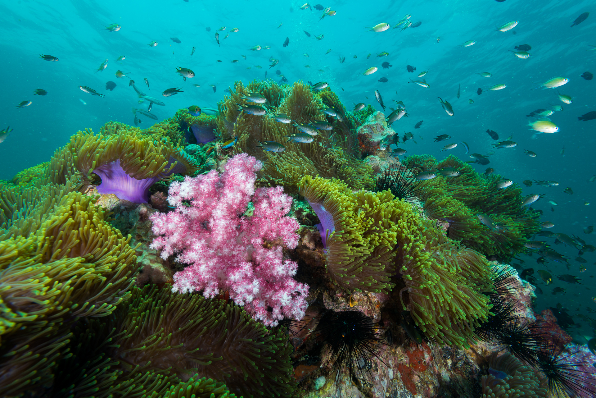 Soft corals at Shark Point
