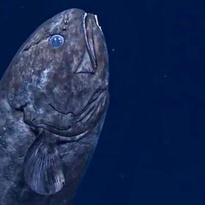 Okeanos-fish_RBrittin