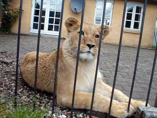 Løver