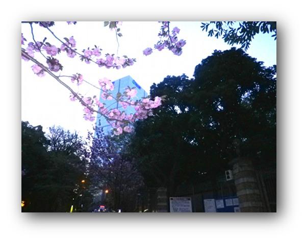 140411hibiyakoukou