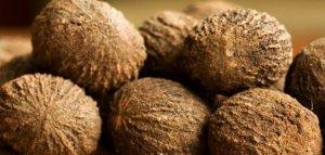 Как принимать настойку черного ореха