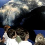 Museo de Cetáceos para niños (Puerto Calero) – Cerrado