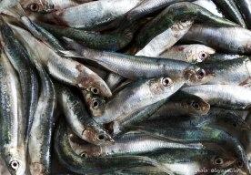 1B0A9641-1_anchovies_ockstyle_©serenaeller