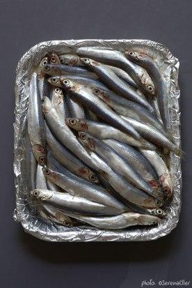 01-1B0A9656_anchovies_ockstyle_©serenaeller