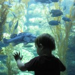 Free Museum Admission from Bank of America
