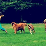 Guide to The Laguna Beach Dog Park