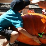 The Best Pumpkin Patches in Orange County