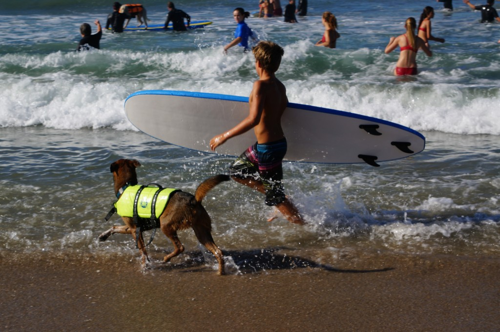 Dog and boy surfing