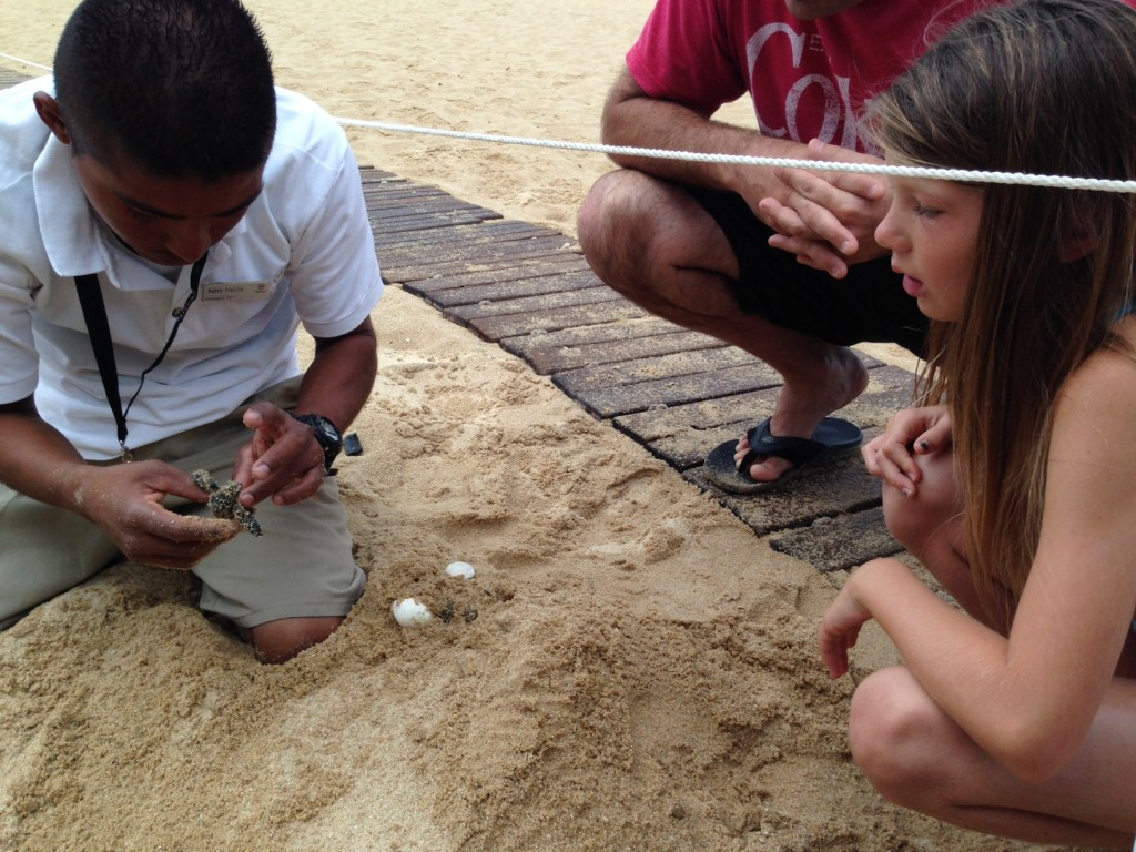 Baby-Sea-Turtle-Hatch-6