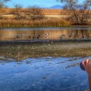 Orange County Hidden Gem The San Joaquin Wildlife Sanctuary
