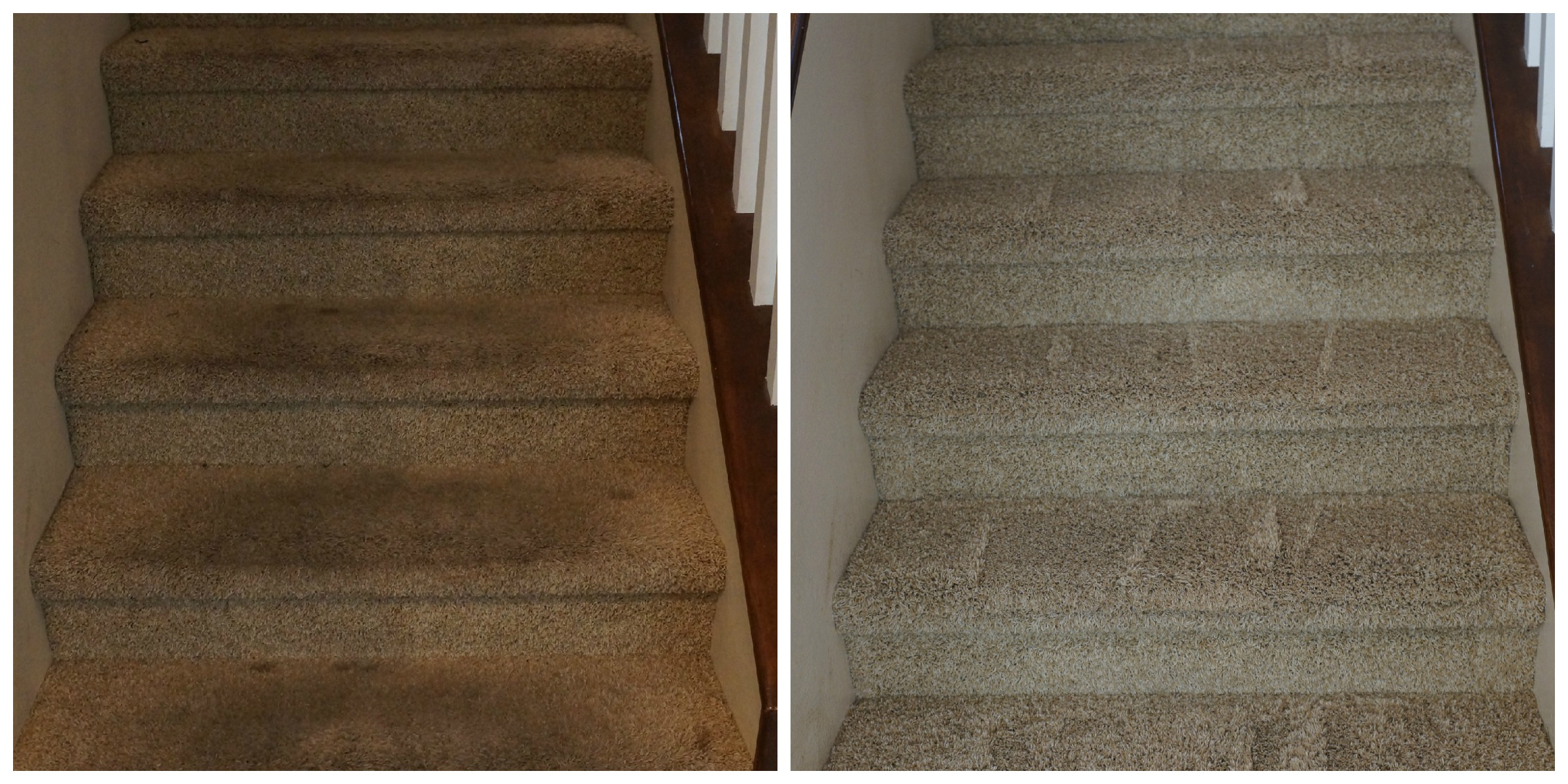How To Clean Your Carpets Without Chemicals Oc Mom Blog