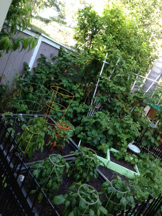 Our backyard vegetable garden