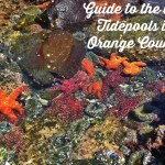 Guide to the Best Tide Pools in Orange County