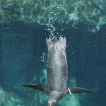 Three Ways to Celebrate the Holidays at the Aquarium of the Pacific