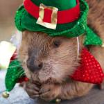 Celebrate Christmas at the OC Zoo