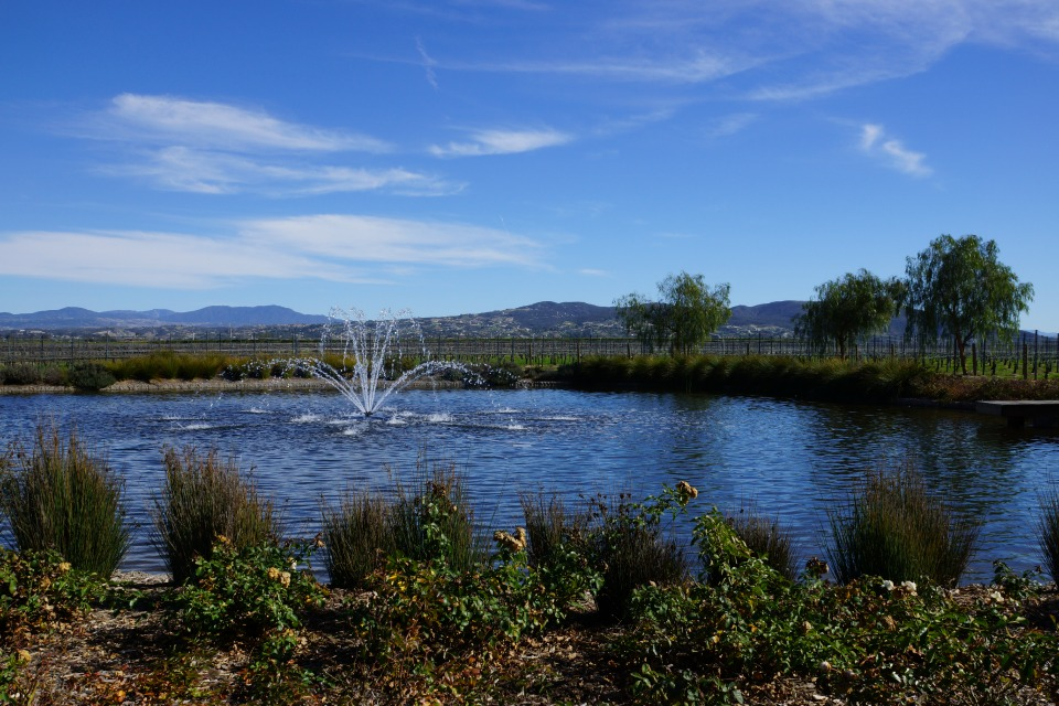 Fountain in Lake at Ponte Vineyard