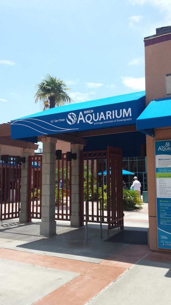 Birch Aquarium 1
