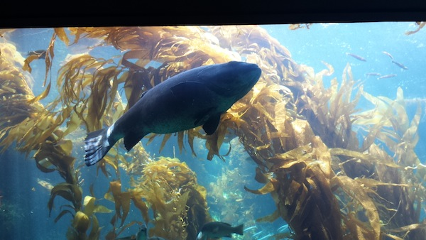 Birch Aquarium 7